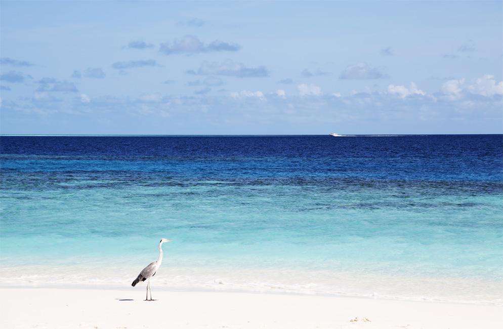 Cocoa-Island-by-COMO-1